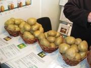 Продажа семенного картофеля!