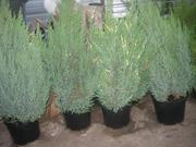 Продам пластиковые вазоны (контейнеры) для растений