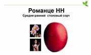 Романце-  картофель с красными клубнями