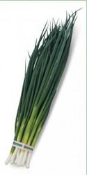 Семена лука на перо Вулкан 20 грамм (Kitano Seeds)