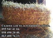 Солома для мульчування рослин в квадратних тюках вагою 20-25 кг